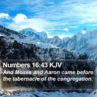 Numbers 16:43 KJV Bible Verse Image