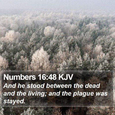Numbers 16:48 KJV Bible Verse Image