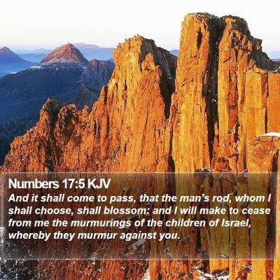 Numbers 17:5 KJV Bible Verse Image