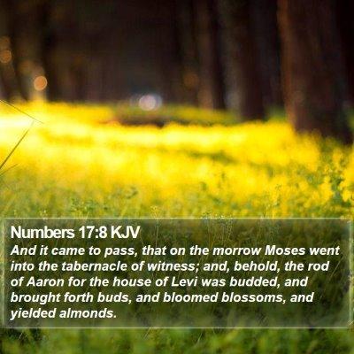 Numbers 17:8 KJV Bible Verse Image