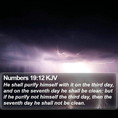 Numbers 19:12 KJV Bible Verse Image
