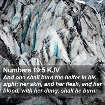 Numbers 19:5 KJV Bible Verse Image