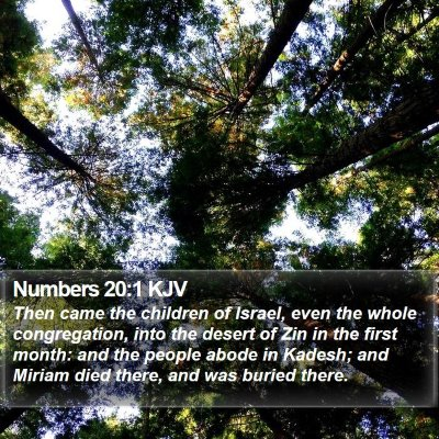Numbers 20:1 KJV Bible Verse Image