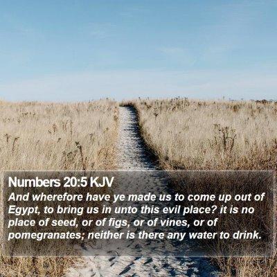 Numbers 20:5 KJV Bible Verse Image