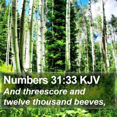 Numbers 31:33 KJV Bible Verse Image