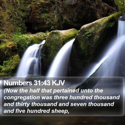 Numbers 31:43 KJV Bible Verse Image