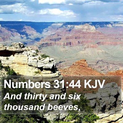 Numbers 31:44 KJV Bible Verse Image