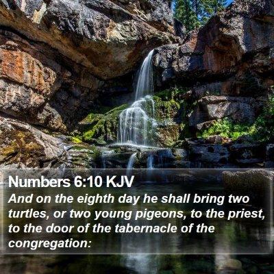Numbers 6:10 KJV Bible Verse Image