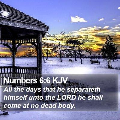 Numbers 6:6 KJV Bible Verse Image