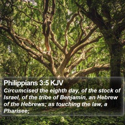 Philippians 3:5 KJV Bible Verse Image
