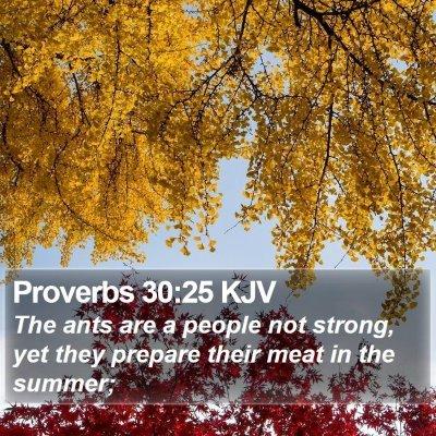 Proverbs 30:25 KJV Bible Verse Image