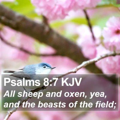 Psalms 8:7 KJV Bible Verse Image