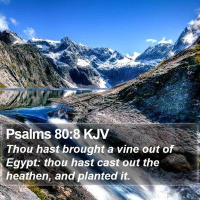 Psalms 80:8 KJV Bible Verse Image