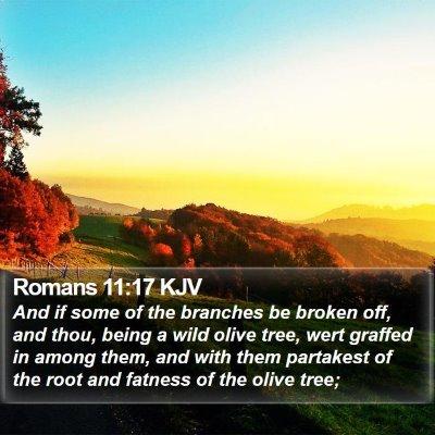Romans 11:17 KJV Bible Verse Image