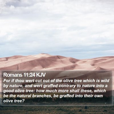 Romans 11:24 KJV Bible Verse Image