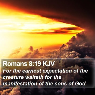 Romans 8:19 KJV Bible Verse Image