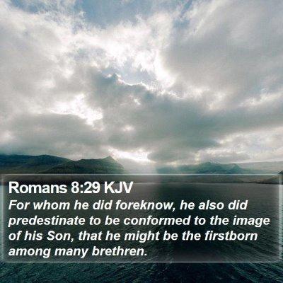 Romans 8:29 KJV Bible Verse Image