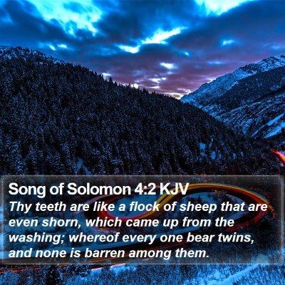 Song of Solomon 4:2 KJV Bible Verse Image