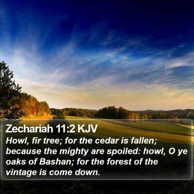 Zechariah 11:2 KJV Bible Verse Image