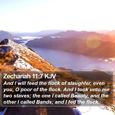 Zechariah 11:7 KJV Bible Verse Image