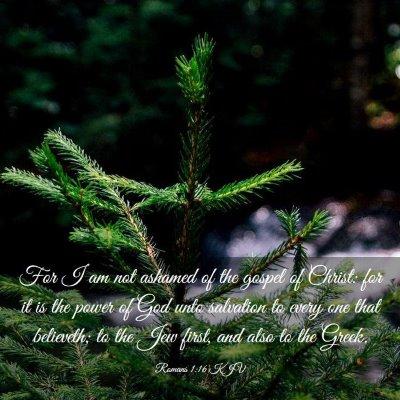 Picture 03 - Romans 1:16 KJV - For I am not ashamed of the gospel of Christ: for - Bible Verse Picture