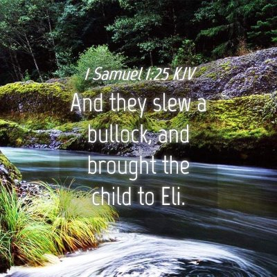 Picture 04 - 1 Samuel 1:25 KJV - And they slew a bullock, and brought the child to - Bible Verse Picture