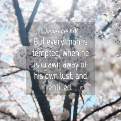 Picture 04 - James 1:14 KJV - But every man is tempted, when he is drawn away - Bible Verse Picture