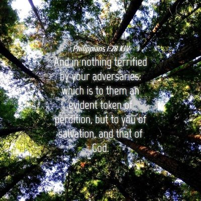Picture 04 - Philippians 1:28 KJV - And in nothing terrified by your adversaries: - Bible Verse Picture